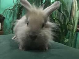 Декоративные, чистокровные, породистые крольчата
