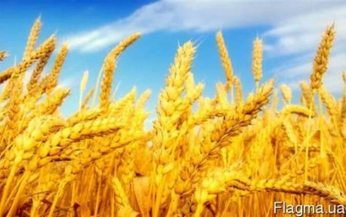 Продам действующие сельское хозяйство 2300га в центральной