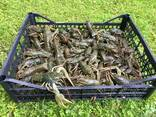 Продаж живих раків - фото 3