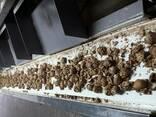 Продажа и переработка грецкого ореха - photo 2