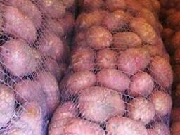 Продажа картофеля для тендеров