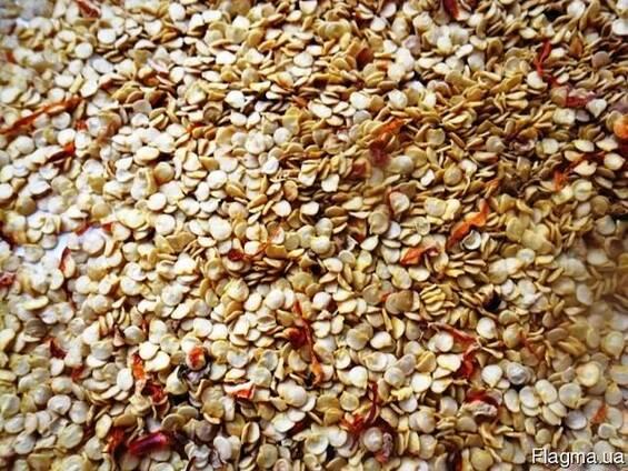 Продажа семян горького перца