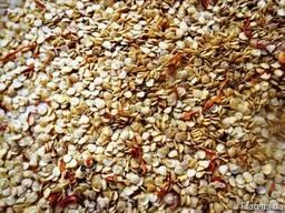 Продажа семян острого перца