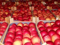 Продажа яблок из холодильника Черновицкая область
