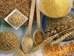 Продажа зерновых