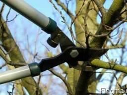 Профессиональный уход за садом. Сезонная обрезка деревьев.