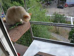 """Прогулочный вольер для кошек на окно. """"Броневик"""" Днепр."""