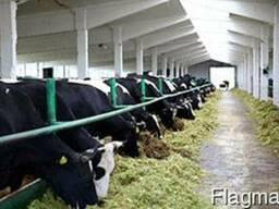 Промышленные полы для животноводства