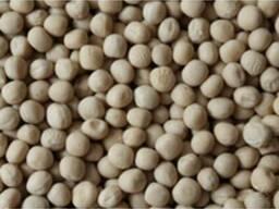 Пропонуємо насіння гороху сортів: Стабіл, Готівський, Салама