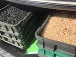 Пропонуємо послуги механізованого збору ягід, продаж комбайну ягідного - фото 2