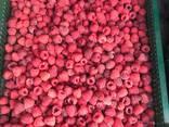 Пропонуємо послуги механізованого збору ягід, продаж комбайну ягідного - фото 4