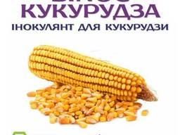 Протруйник для кукурудзи - BINOC Кукурудза ENZIM Agro