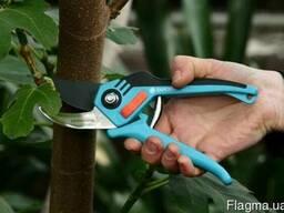 Проводимо професійну обрізку плодових дерев та кущів