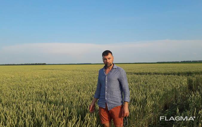 Пшеница канадской селекции двуручка 1 репр.