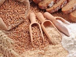 Пшеница, мука пшеничная, отруби пшеничные, кукуруза фуражная