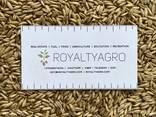 Ячмень пшеница - фото 6