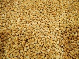Пшеница 2,3 кл