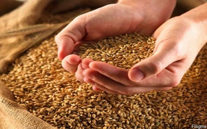 Пшеница, ячмень, кукуруза,просо