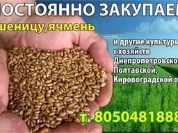 Пшеницу 2 клас (гр. А) на переработку