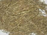 Пырей, пирій повзучий корень - фото 1