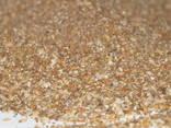 Ракушка кормовая морская - фото 1