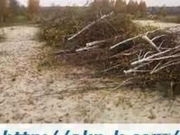 Расчистка территории Киев, Вырубка деревьев