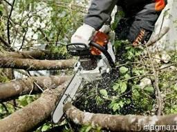 Спил деревьев, корчевка пней, планировка территории,