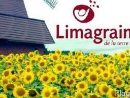 Реалізуємо урожайні гібриди соняшнику Сингнета і Лімагрейн