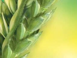 Регулятор роста Хлормекват-хлорид