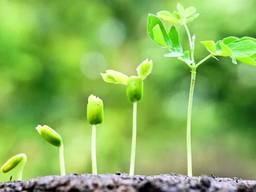 Регулятор роста растений МАРС-У (прилипатель)