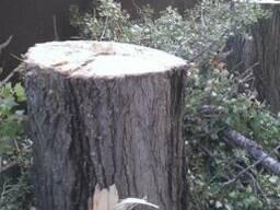 Резка аварийных деревьев киевская обл. чистка веток - фото 3