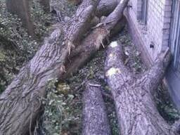 Резка аварийных деревьев киевская обл. чистка веток - фото 4