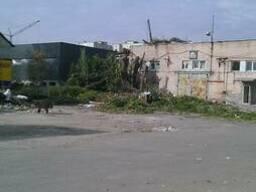 Резка аварийных деревьев киевская обл. чистка веток - фото 5