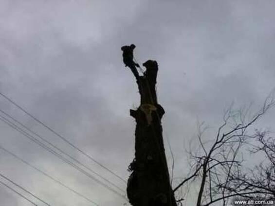 Резка аварийных деревьев киевская обл. чистка веток