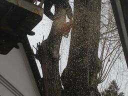 Резка деревьев кронированние Киев.