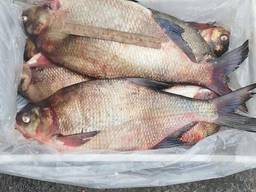Риба опт. Свіжоморожена, в'ялена, риба х/к