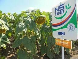 Семена подсолнечника Рими под евролайтнинг