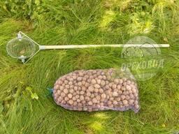 Ролл для сбора грецкого ореха диаметром 2-5 см (Украина)