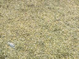 Ромашка цвет, трава - фото 2