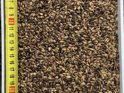 Розторопша / расторопша / Milk thistle seeds