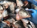 Рыба, Море-продукты, Снеки (ОПТ) - фото 3