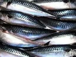Рыба морская в ассортименте