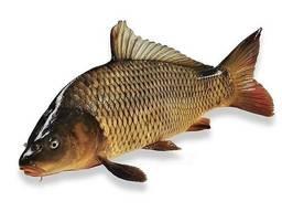 Рыба речная оптом