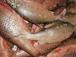 Рыба речная свежемороженная - фото 1