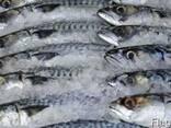 Рыба свежемороженая в ассортименте - фото 1