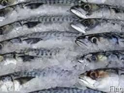 Рыба свежемороженая в ассортименте
