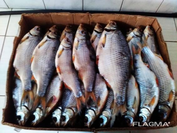 Рыба вяленая от производителя