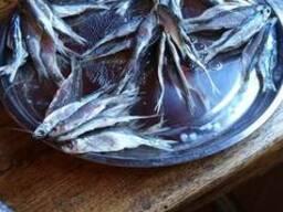 Рыба вяленая, верховод