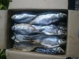 Рыбопереробатывающий цех продаёт вяленую рыбу в ассртименте