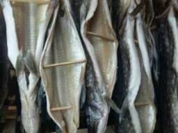 Рыбная продукция. Щука вяленная, сушеная.